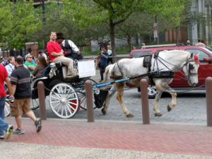 A horse and carriage strolls by Independence Hall. (Candice Monhollan)
