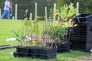 All the trees planted around Hillendale Elementary Oct. 12 are native to Pennsylvania. (Candice Monhollan)