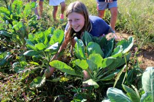Maggie VanDyke, 10, helps pick collard greens at Pete's Produce as part of East Goshen Elementary School's Harvest for Humanity on Sept. 17. (Candice Monhollan)