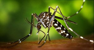 The West Nile virus has been found in a mosquito sampling from Tredyffrin Township. (WebMD)